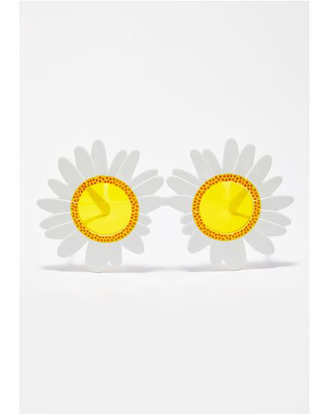 Fresh Picked Daisy Sunglasses