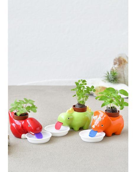 Orange Zaurus Dinosaur Mini Plant