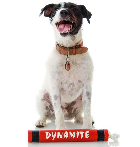 Big Dyn-o-mite Dog Toy