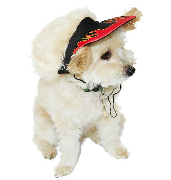 Hot Rod Dog Hat