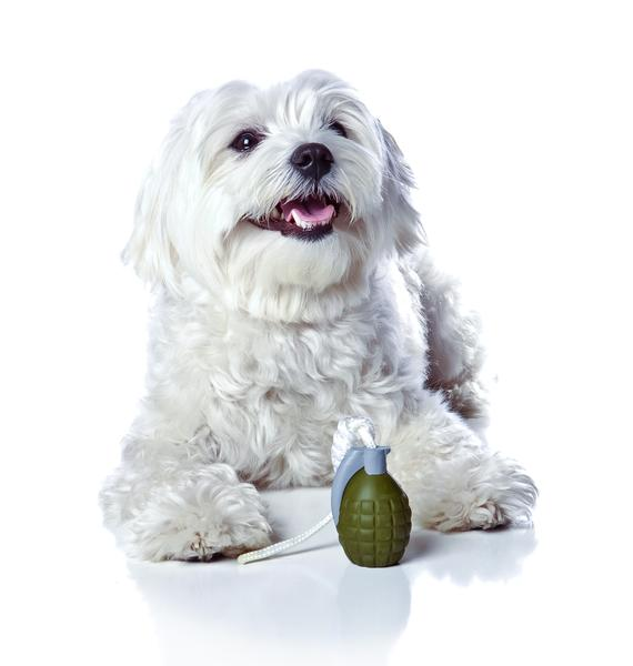 Grenade Rubber Dog Toy