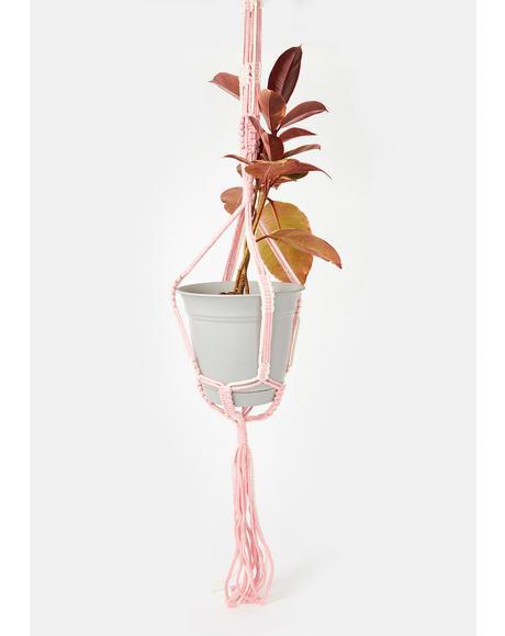 Sweet Hangin' Around Woven Plant Hanger