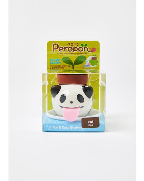 Panda Peropon Mini Plant