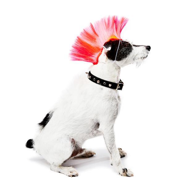 Bark N Roll Dog Headband