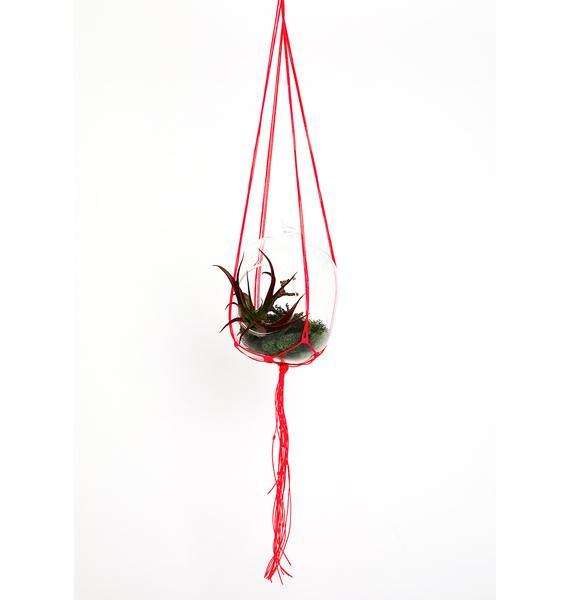 Reef Knot Neon Pink Macrame Plant Hanger