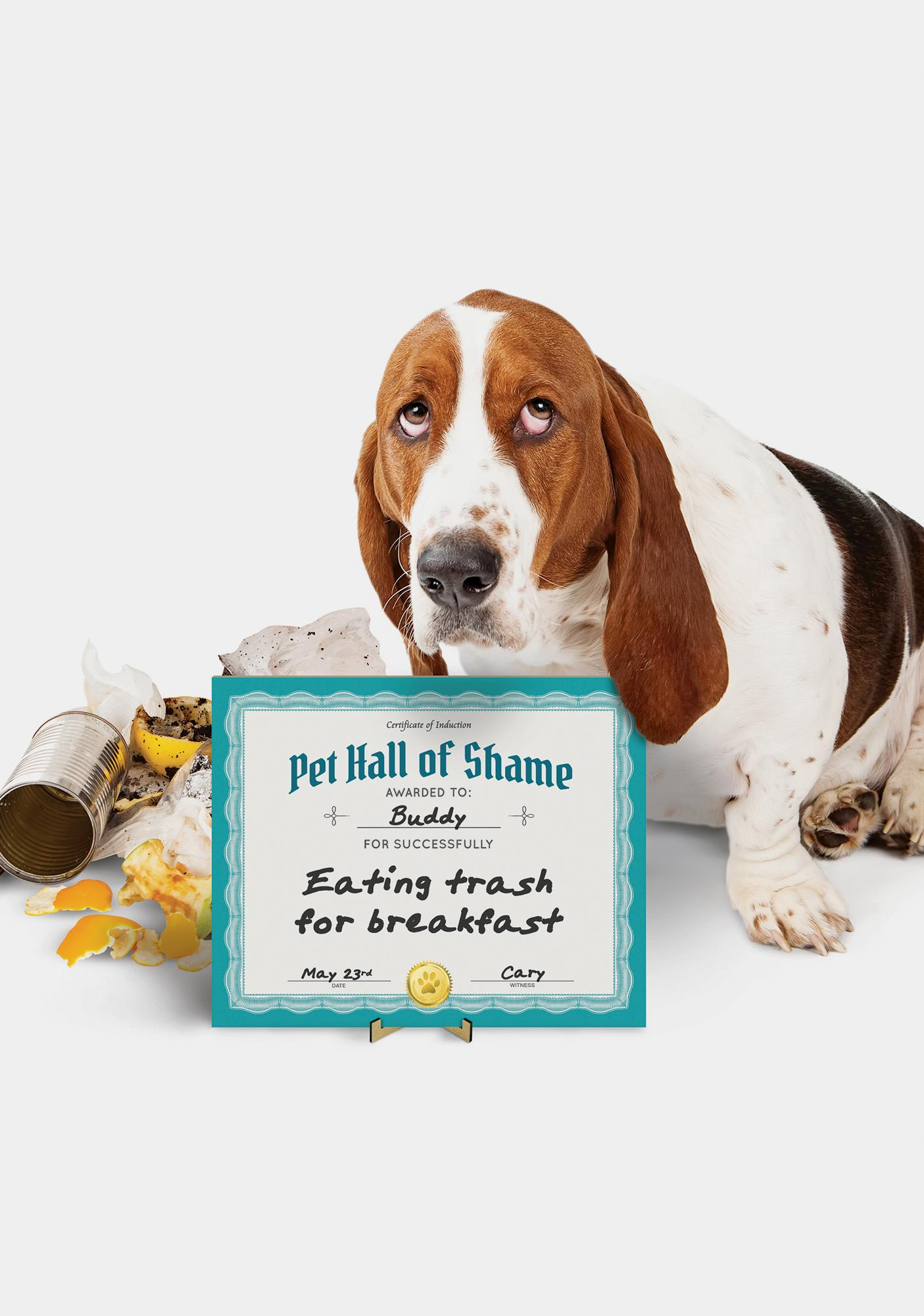 Pet Hall Of Shame Whiteboard Certificate