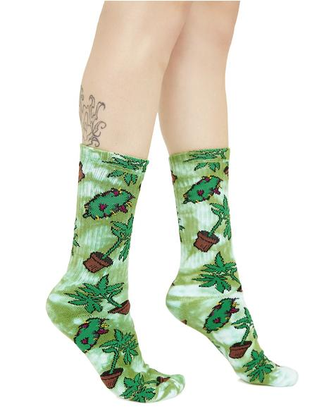 Bud Crew Socks
