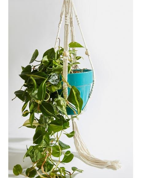 Leaf Me Alone Hanging Planter Set