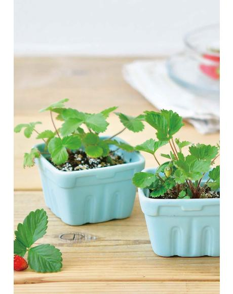 Berry Happy Strawberry Planting Kit