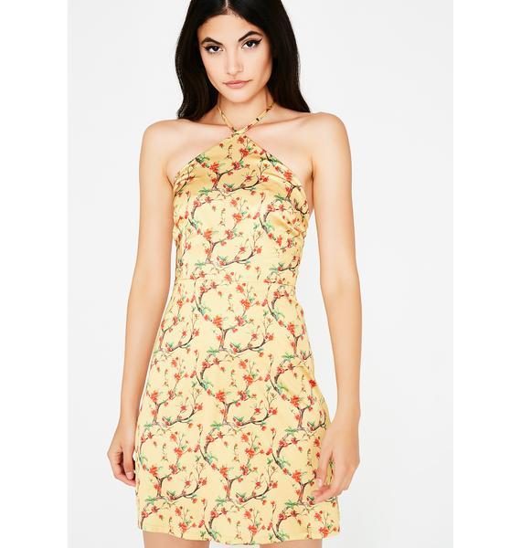 Sprung On Ya Silky Dress