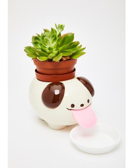 Papa Dog Peropon Mini Plant