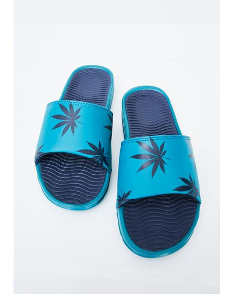 Berry Plantlife Graphic Slides