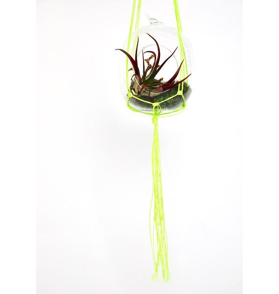 Reef Knot Neon Yellow Macrame Plant Hanger
