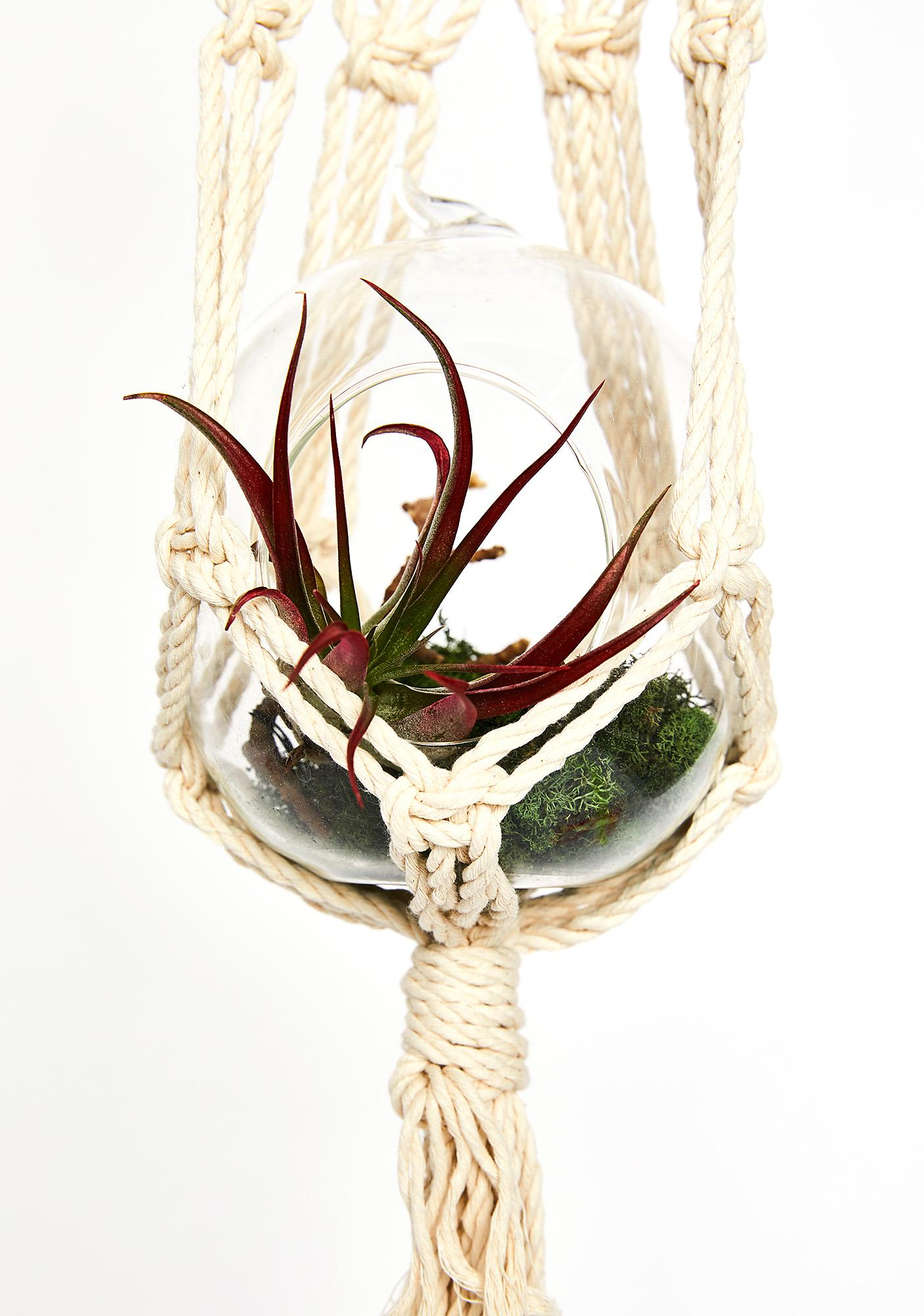 Reef Knot Macrame Wall Plant Hanger