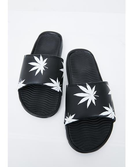 Plantlife Graphic Slides