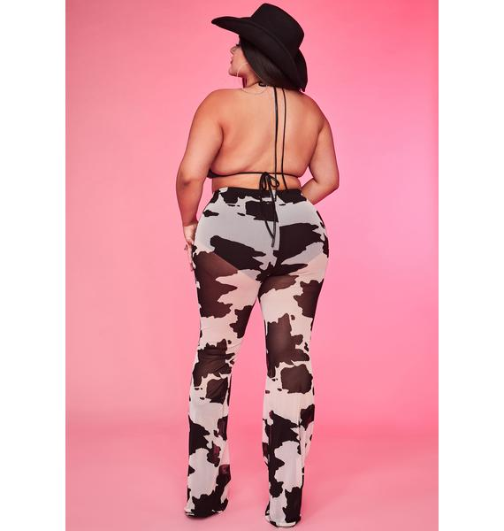 Mz. Legend Dairy Sheer Flares