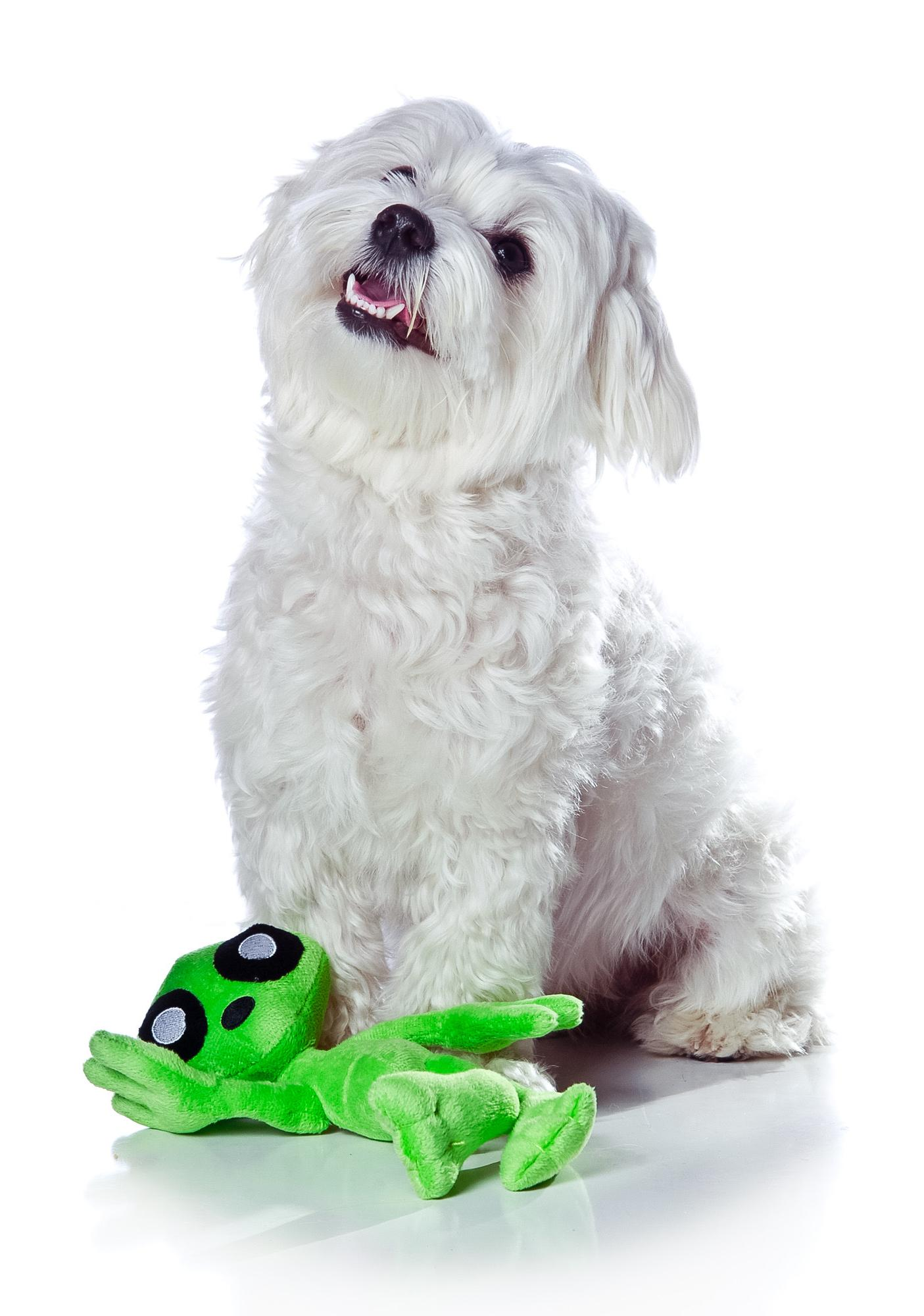 Albert Alien Mighty Dog Toy Jr.
