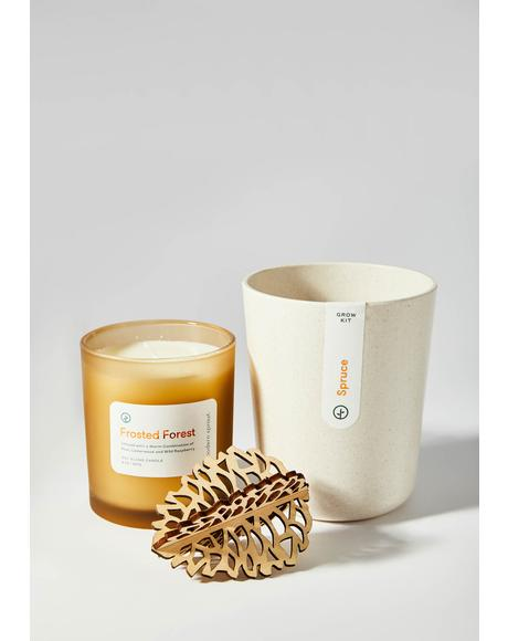 Bamboo Pot Pinecone Grow Kit