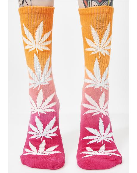 Gradient Plantlife Socks