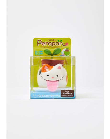 Cat Peropon Mini Plant