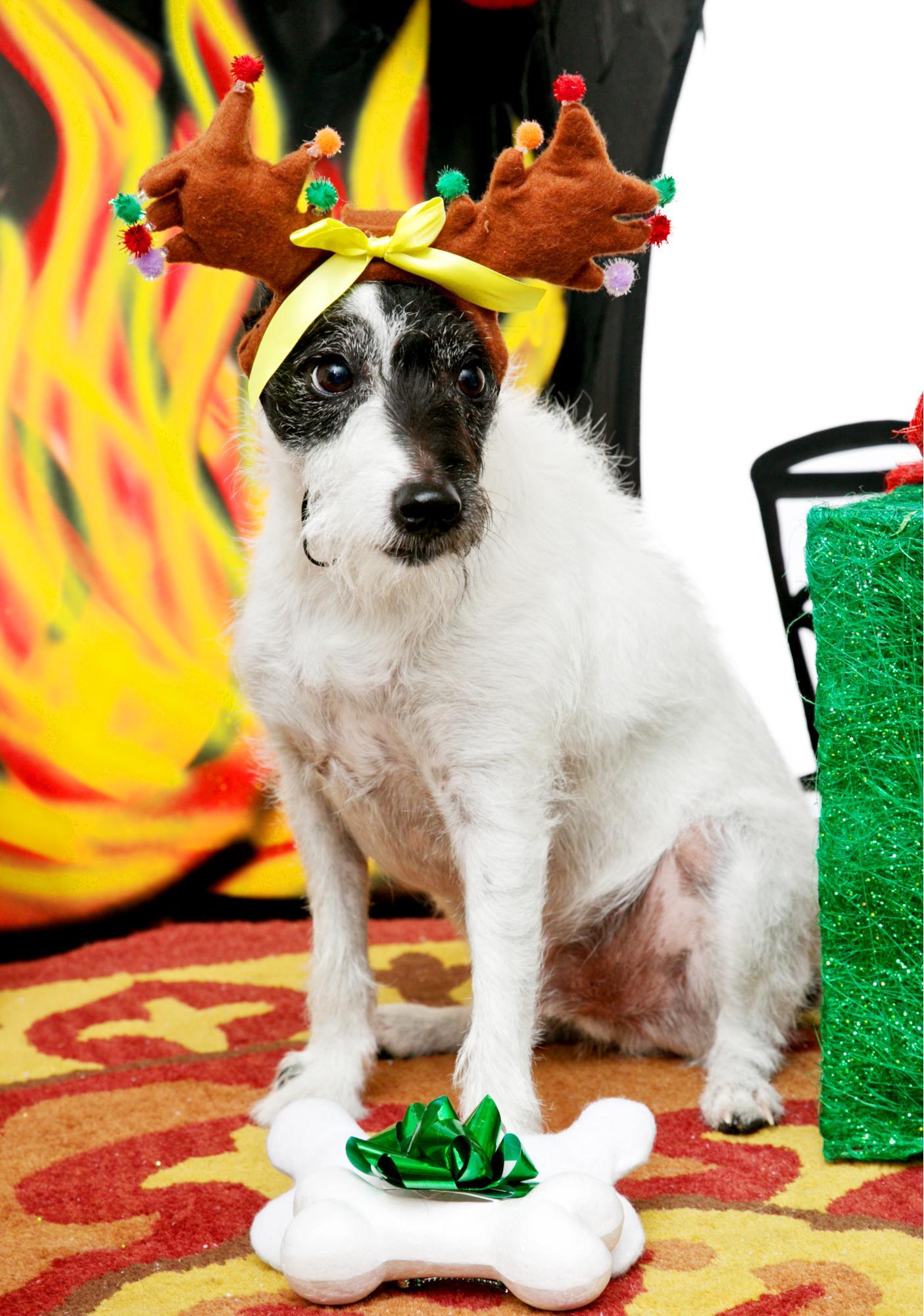 Guide My Sleigh Light-Up Dog Headband