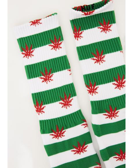 Plantlife Candy Cane Socks