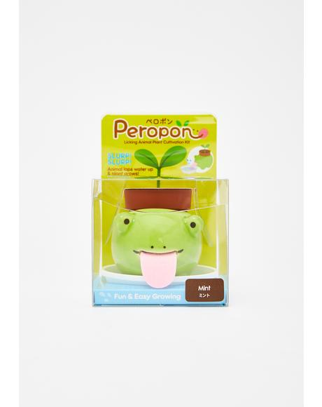 Frog Peropon Mini Plant