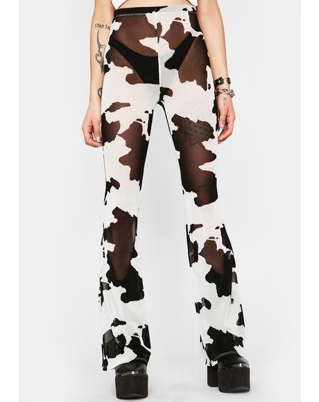 Legend Dairy Sheer Flares