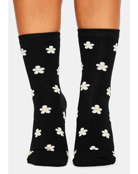 Midnight Meadow Mosey Daisy Crew Socks