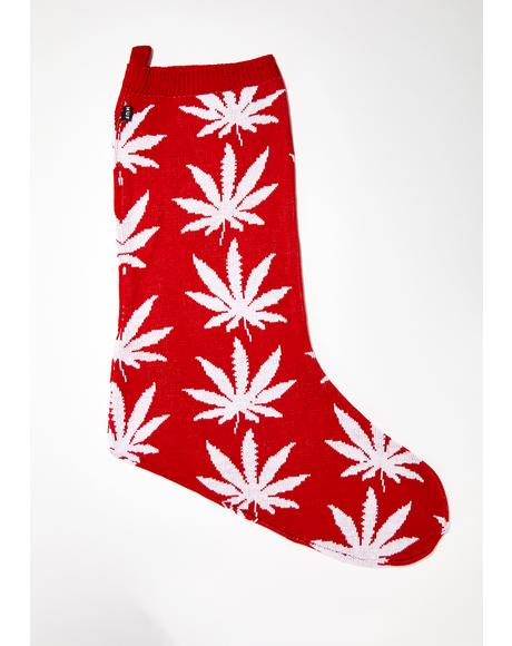 Plantlife Stocking