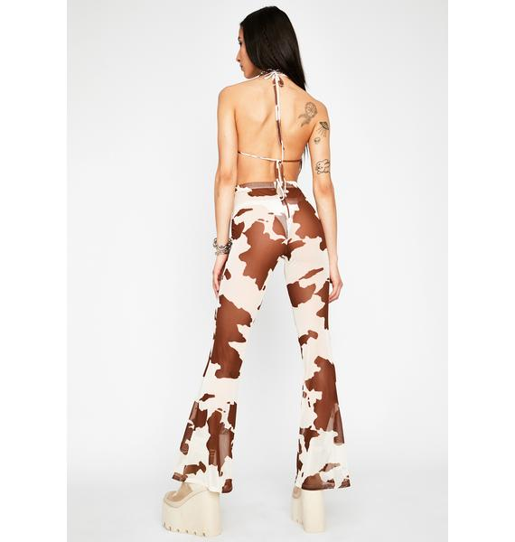 Cocoa Legend Dairy Sheer Flares